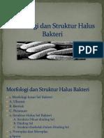 2-morfologi-dan-struktur-halus-bakteri.pdf