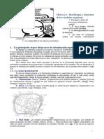 21 Morfología y estructura de las ciudades.doc