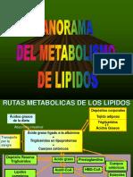 metabolismo-lipidos-15-16.ppt
