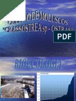 acuicultura ostras (crassostrea)