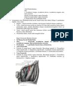 148572843-Anatomi-Femur-Dan-Pendarahannya.docx