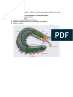 Subfilum Onychophora