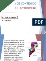 6. Tronco Cerebral y Cerebelo