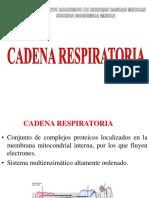 Cadena Respiratoria i