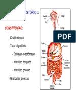 digestorio1.bio.pdf