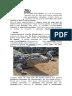 Crocodilo.docx