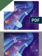 10-Membranas biológicas.pdf