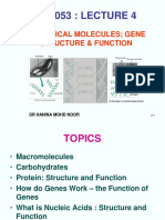 Lecture 4 (Cell  Mol Biology - Biological Molecules_ gene structure  function).ppt
