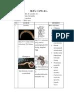 340577256 Kunci Identifikasi Perbedaan Kelas Annelida Docx