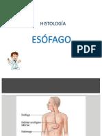 Histologia Esofago Estomago