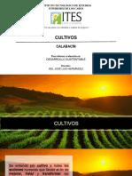 CALABACIN CULTIVO-1
