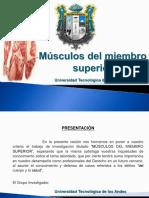 musculos_del_miembro