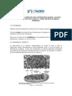 Preinforme succinico.doc