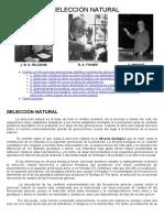26d-Genética Evolutiva.-Seleccion Natural.pdf