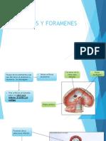 Hiatos y Foramenes
