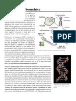 Ácido_desoxirribonucleico