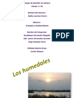 Humedales  Ecología