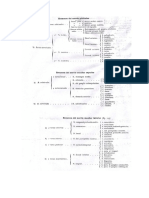 Ramas_del_Nervio_Trigemino.pdf