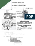 262875752-19-Drenaje-Linfatico-de-Cabeza-y-Cuello.pdf