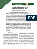 Benefícios da erva mate Ilex Paraguariensis