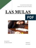 mulas_essai_partie_1[1]