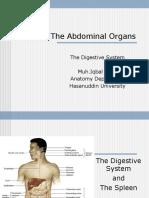 The Abdominal Organs (2).ppt