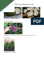 Lista de PANCs Para Biogincana