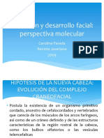 Evolucion y Desarrollo Facial Perspectiva Molecular