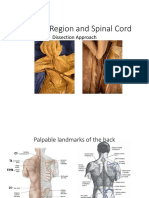 Scapular Region and Spinal Cord Lab
