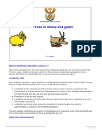 Diarrhoea in Sheep and Goats