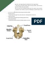 anatomi rahang