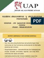 trabajo de parasitologia.pptx cesar.pptx
