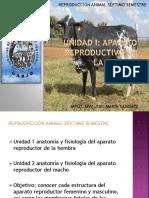 Unidad 1a Anatomia Del Aparato Reproductivo de La Hembra