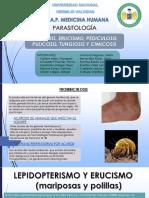 ACAROSIS, ERUCISMO, PEDICULOSIS, PULICOSIS, TUNGIOSIS Y CIMICOSIS- SEM 6.pptx