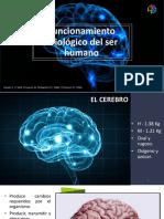 Funcionamiento fisiologico del ser humano