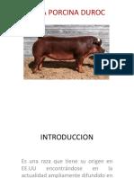 Raza Porcina Duroc