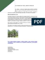 Herbicida de Fique Unodc Bcp 2011(1).