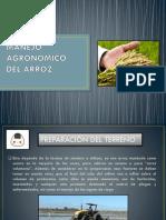 Manejo Agronomico Del Arroz