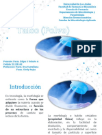 Polvo - Talco Microbiologia Aplicada