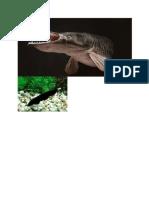 ikan 3.docx