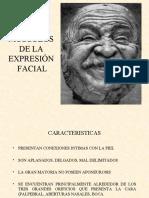 Musculos de la Expresión Facial
