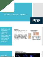Digestión en Neoatos