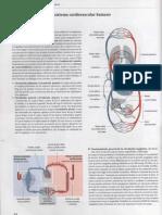 Prometheus Tomo 1 - Anatomía General y Aparato Locomotor