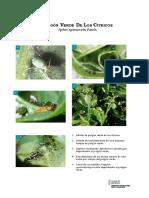 f_pulgon_verde.pdf