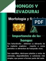 Hongos y Levaduras1