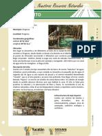 Yucatan Progreso Cenote ElCorchito