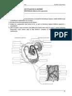 UT v Estructura y Procesos Vitales en El Hombre- Sistema Osteomuscular 2018(1)