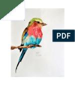 Aves lápis de cor  ok.docx