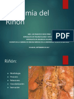 anatomiadelrinon-170907045310