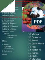 Cartea Roșie a Republicii Moldova